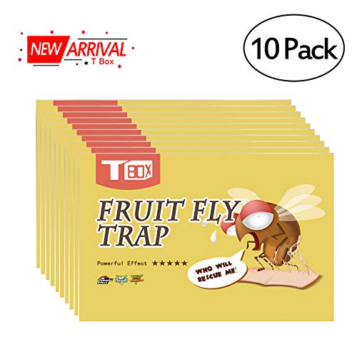 T Box Fruit Fly Trap,Fly Trap,Gnat Trap,Fly Paper Indoor for Flying Insect,Fruit Fly Traps,Fly Killer for Kitchen,10 Pack