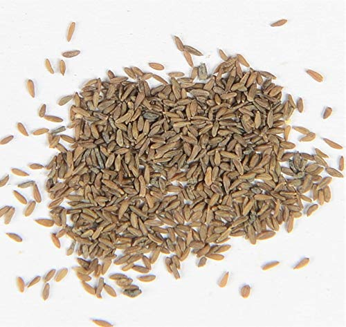Alpen-Edelweiß Leontopodium nivale 100 Samen
