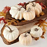 Factory Direct Craft Package of 6 Fall Artificial Assorted Creamy White Pumpkins for Halloween, Fall and Thanksgiving Decorating