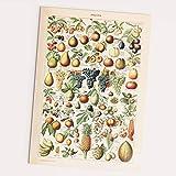 Follygraph Fruits Vintage Poster - Obst Bild, Adolphe