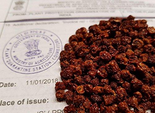 100 Samen Gloriosa Superba, Ruhmeskrone, Flammenlilie, frischer Import aus Indien