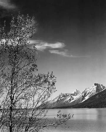 The Poster Corp Ansel Adams – View of Mountains with Tree in Foreground Grand Teton National Park Wyoming 1941 Kunstdruck (60,96 x 76,20 cm)