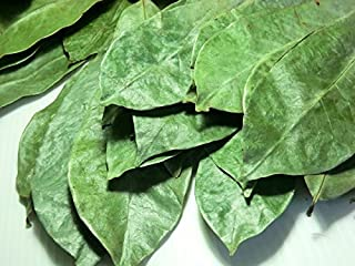 Graviola Leaves/soursop Leaves(guanabana)1000 Plus Leaves-BY PURELIFE HERBS