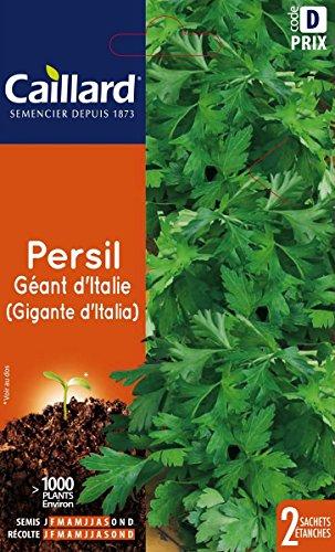 Caillard PFCC14406 Graines de Persil Géant d'Italia