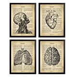 Framed Human Anatomy Definition Background Poster Set Human Head Wall Art Brain Clinic Doctor Office Decor Medical Nurse Gift Lungs Heart Illustration Anatomy Print Set