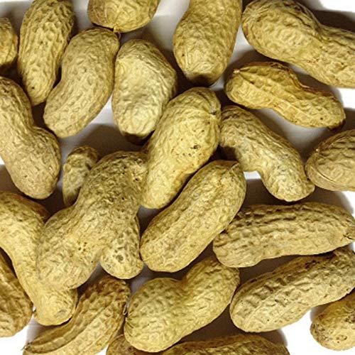 Versele Erdnüsse in der Schale 11,3 kg