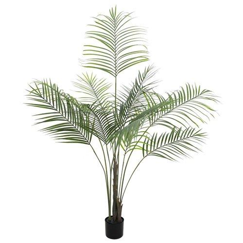 Euro Palms 82509442 Großblatt-Areca 185 cm