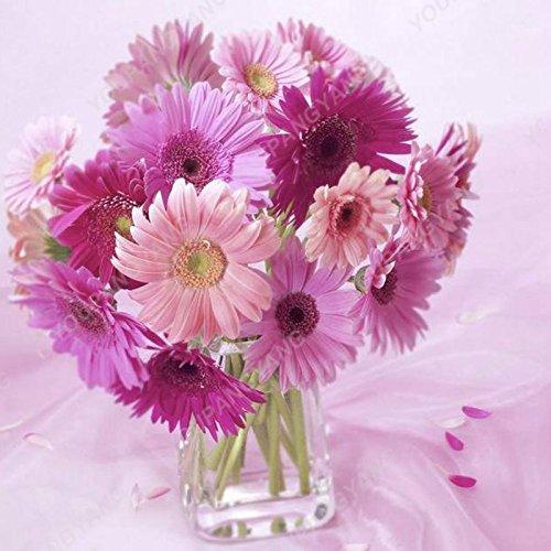 Grosses soldes! 100pcs Nouvelle arrivée Graines de fleurs Daisy Graines rares Chrysanthème Graines de fleurs Plante en pot pour jardin Livraison gratuite graines Chrysanthème