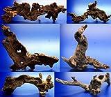 WFW wasserflora Mopani-Wurzel 20-30 cm