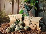 Samenbomben 5-7 Stück Bienenwiese Seedbombs Samenkugel Mitgebsel Mitbringsel Geschenkidee Samen für Garten Balkon Insekten Insel Saatgut Blumenwiese