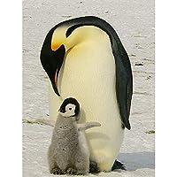 ダイヤモンド絵画キット 大人 子供用 ペンギン動物 ダイヤモンドナンバーラインストーンペインティングキット、大人の子供向け手作りダイヤモンドアートクラフトム 30x40cm