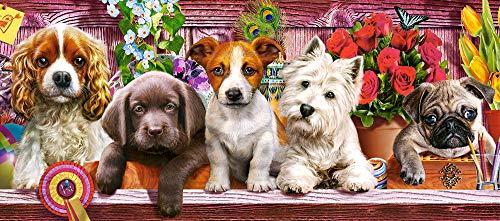 Castorland Puppies on a Shelf Puzzle - Rompecabezas (Puzzle rompecabezas, Animales, Niños y adultos, Cachorro, Niño/niña, 9 año(s)) , color/modelo surtido