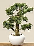 Accueil Collection - Meubles, décoration, Plantes artificielles - Cyprès bonsaï Artificiel en Vase - matière: Plastique - Couleur: Naturel - dim. H Environ 48 cm