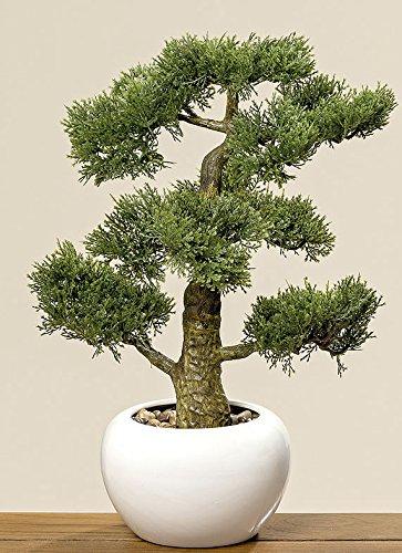 Home Collection Muebles, decoración, plantas artificiales - Ciprés bonsai artificial en macetero - material: plástico - Color natural - dim. A aprox. 48 cm