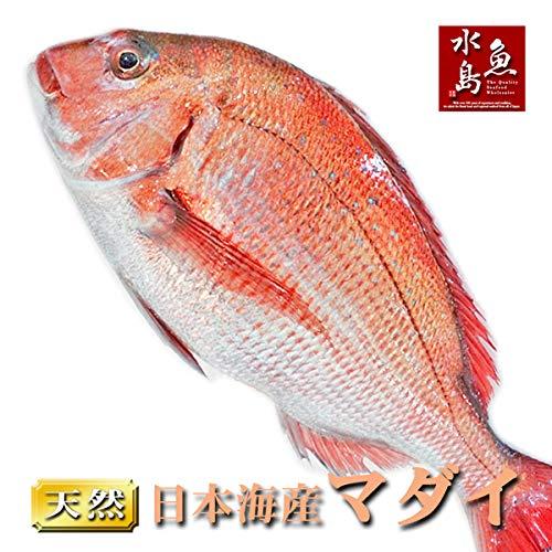 魚水島 天然真鯛 マダイ 桜鯛 日本海産 3.5〜3.9キロ物