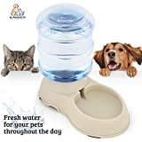 Dog Water Fountains