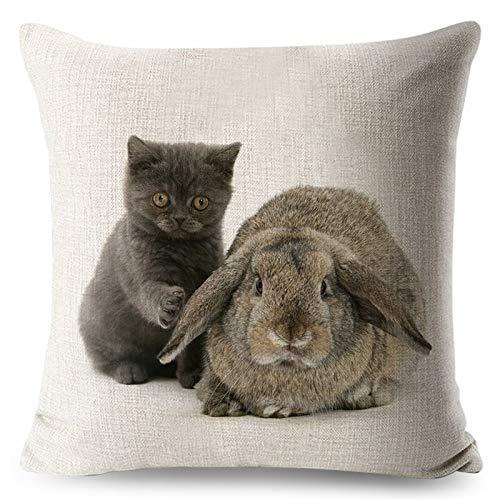 50 x 50 cm, federa per cuscino con gatto amorevole carino coniglio federa divano animale stampato decorazione casa #94