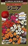 サカタのタネ 実咲花9620 ジニア プロフュージョンダブルミックス 00909620