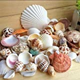 ypypiaol Conchas mezcladas en la Playa, Conchas Coloridas y Naturales, Acentos fabricación de Velas, decoración de Fiesta en la Playa, decoración de Bodas, artesanía, Acuario y jarrón Rellenos