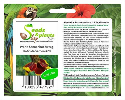 Stk - 40x Prärie Sonnenhut Zwerg Ratibida Blumen Pflanzen - Samen #20 - Seeds Plants Shop Samenbank Pfullingen Patrik Ipsa