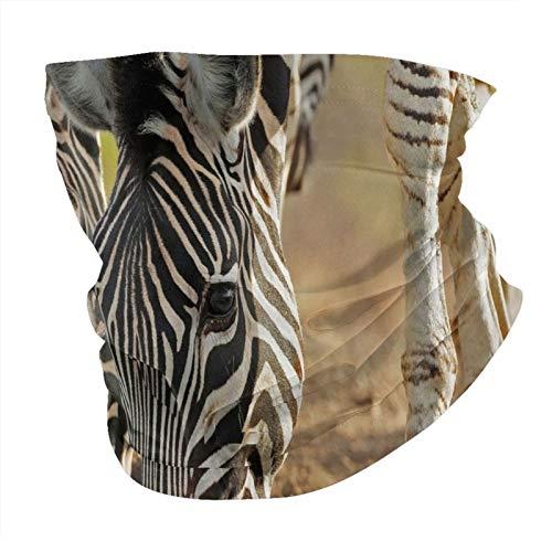 Zebra África Wildlife animales grandes sin costuras Multifuncional Headwear Variedad Bufanda Cabeza Diseño Personalizado Capucha Deportes al aire libre Diadema