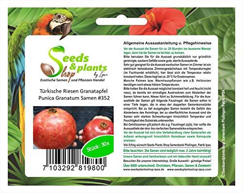 Stk - 30x Türkische Riesen Granatapfel Punica Granatum Pflanzen - Samen #352 - Seeds Plants Shop Samenbank Pfullingen Patrik Ipsa