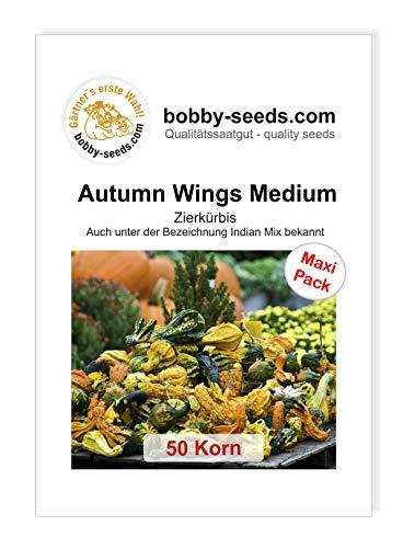 Autumn Wing M Zierkürbis von Bobby-Seeds 50 Korn