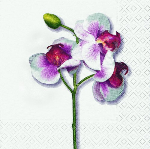 20 Servietten Classic Orchid white – Klassische Orchidee weiß / Blumen 33x33cm
