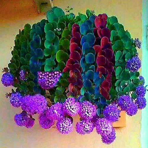 Cioler Seme di fiore- 100 pz/borsa Misto Colore Cactus-cipolla Semi di Piante grasse Cactus Fiore Cactus e piante grasse pianta ornamentale