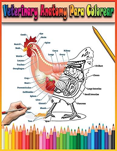 Veterinary Anatomy Para Colorear: Libro para colorear de anatomía animal y fisiología veterinaria versión ingles para niños.