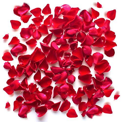 THE TWIDDLERS 1000 Piezas Pétalos de Rosas Rojas de Seda - Artificiales inodora secas Rosa día de San Valentín - Celebraciones Aniversario de Boda - Mesa Decoracion - Momentos románticos