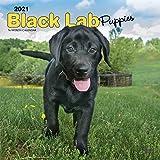 Black Labrador Puppies - Schwarze Labradorwelpen 2021 - 16-Monatskalender mit freier DogDays-App: Original BrownTrout-Kalender [Mehrsprachig] ... mit freier DogDays-App (Wall-Kalender)