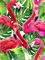 Paint by Number Kit Diy Painting by Numbers Paint by Number Kit for Adults on Canvas for Adults Kids Room Decor 動物の鳥-diyの木製フレーム