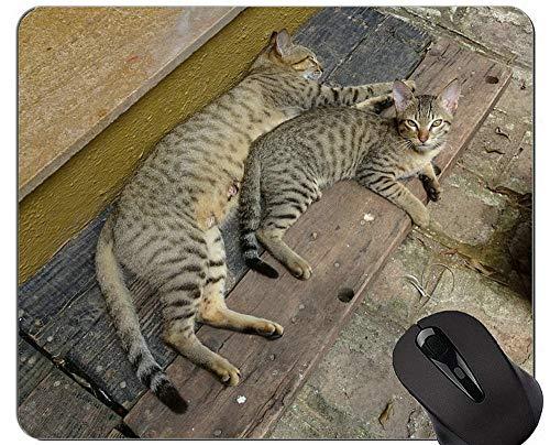 Yanteng Alfombrillas de ratón, Linda Alfombrilla de ratón Original de Gato de Pelo Corto exótico, Alfombrilla de ratón de Gato de Bengala con Borde Cosido