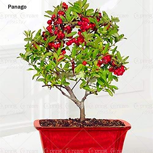 GETSO Mini Kirschbaum Pflanze Bonsai-Baum-Gesunde Obstgarten Topfpflanzung Stauden Familie Obst Pflanze Baum 20Pcs / Bag