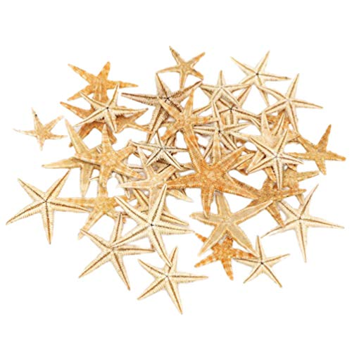 Milisten Tiny Miniature Fairy Garden Beach Critter Sea Star Marine Life Collection for Arts Crafts Projects Decorations Party Favors Invitations (2-3cm)