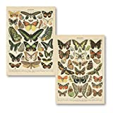 Popular Vintage French Types of Papillons Butterflies Set; Two 11x14in Paper Print Posters...