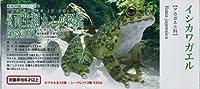 ユージン 原色図鑑シリーズ19 原色両生類カエル図鑑【新改訂版】 イシカワガエル
