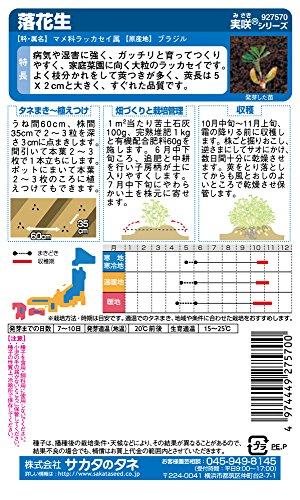 『サカタのタネ 実咲野菜7570 落花生 00927570』のトップ画像