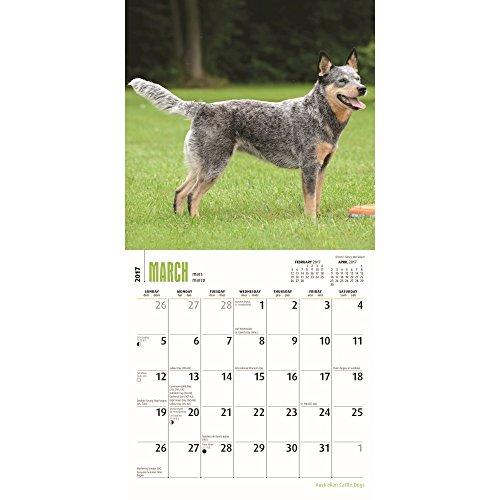 "Australian Cattle Dogs 2017 Mini Calendar 7"" x 7"""