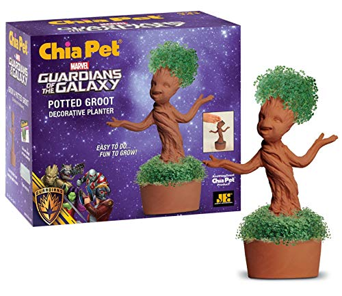Groot Chia Plant