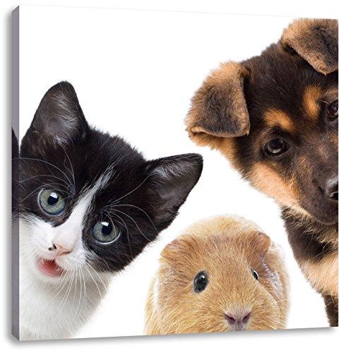 Hond Kat trio caviaCanvas Foto Plein | Maat: 70x70 cm | Wanddecoraties | Kunstdruk | Volledig gemonteerd