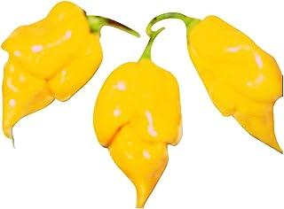 Trinidad Scorpion Yellow, eine der schärfsten Chilis der Welt 10 Samen von Samenchilishop