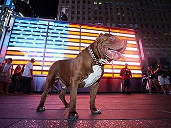 Hulk Takes Over New York