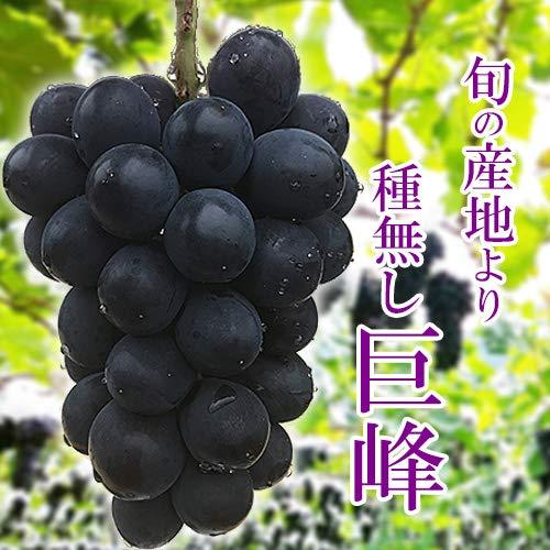 【 旬の産地 】種無し巨峰 巨峰 ぶどう (箱込 約2kg前後(3〜6房))