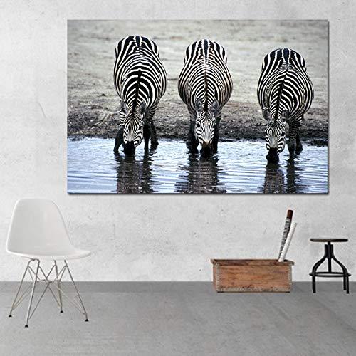 Tierbilder Zebras Trinkwasser Wandbilder Für Wohnzimmer Leinwand Kunstdrucke Poster Dekoration Malerei dro R1 70x100 CM