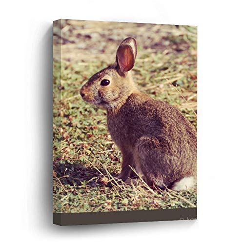 Cute Bunny Rabbit In Sunlight Nature Photo Canvas Picture Painting Artwork Wall Art Poto Framed Canvas Prints for Bedroom Living Room Home Decoration, Ready to Hanging 16'x24'