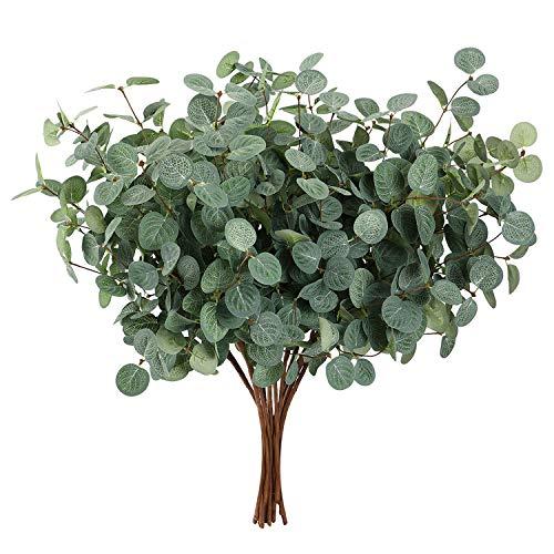 Planta De Eucalipto  marca UYICOO