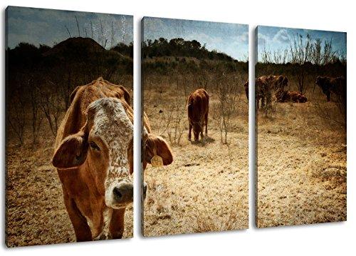 Texas koeien schilderij op doek, 3-delige (Totale Grootte: 47.2