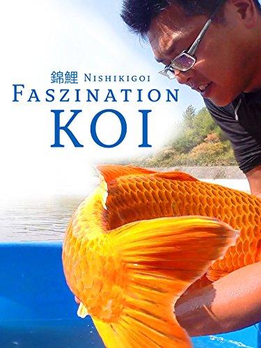 Nishikigoi - Faszination Koi